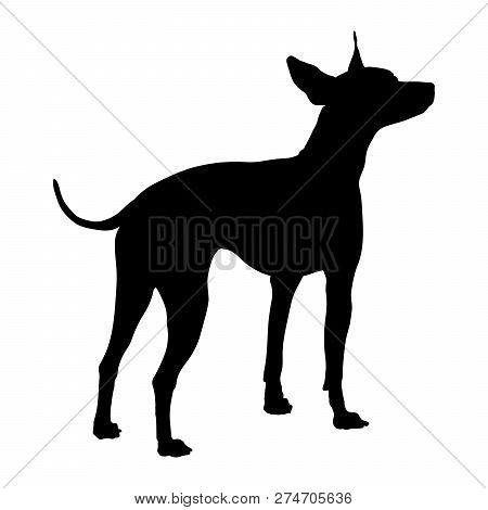 American Hairless Terrier On A White Background. Silhouette. Vector Illustration