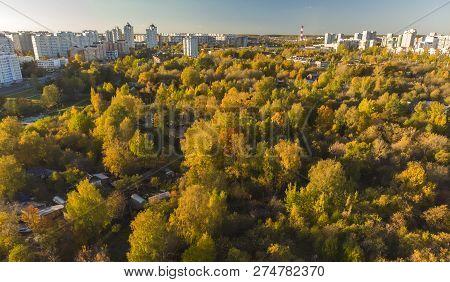 Autumn Deciduous Forest Near A Zelenograd, Russia