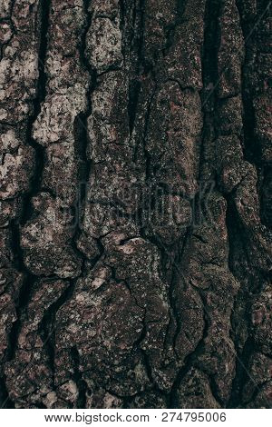 Full Frame Of Dark Tree Barque Texture As Background