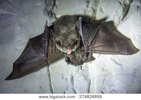 Angry Pair Of Bats Disturbed During Hibernation.