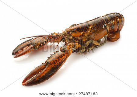 raw lobster isolated on white