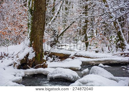 Log Over The Brook In Winter Forest Full Of Snow. Calm Nature Scenery. Brown Foliage Is Present On S