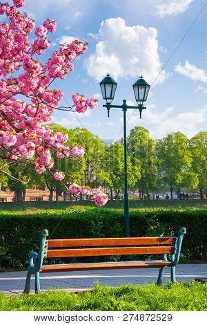 Bench On The Embankment Near The Lantern And Sakura Tree In Blossom. Wonderful Springtime Scenery Of