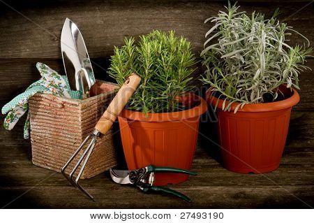 garden herbs with utensil