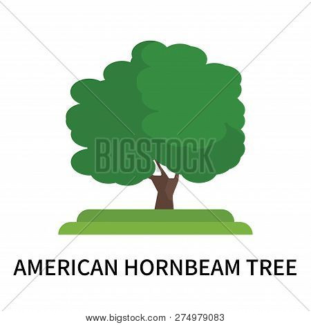 American Hornbeam Tree Icon Isolated On White Background. American Hornbeam Tree Icon Simple Sign. A