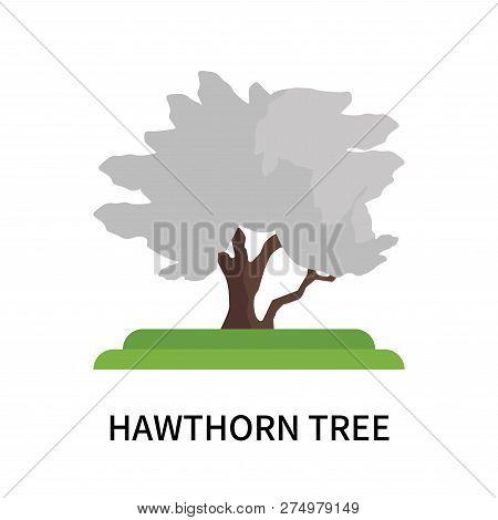 Hawthorn Tree Icon Isolated On White Background. Hawthorn Tree Icon Simple Sign. Hawthorn Tree Icon