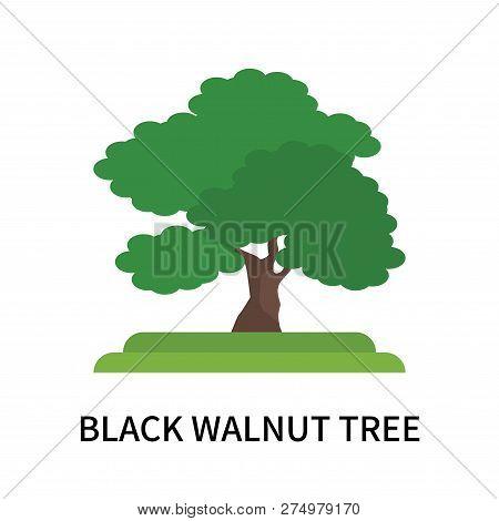 Black Walnut Tree Icon Isolated On White Background. Black Walnut Tree Icon Simple Sign. Black Walnu