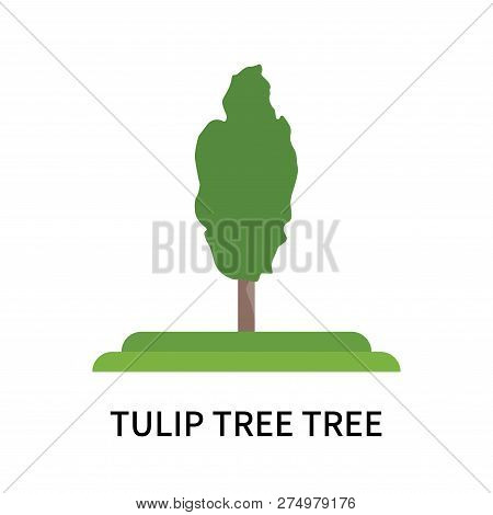 Tulip Tree Tree Icon Isolated On White Background. Tulip Tree Tree Icon Simple Sign. Tulip Tree Tree