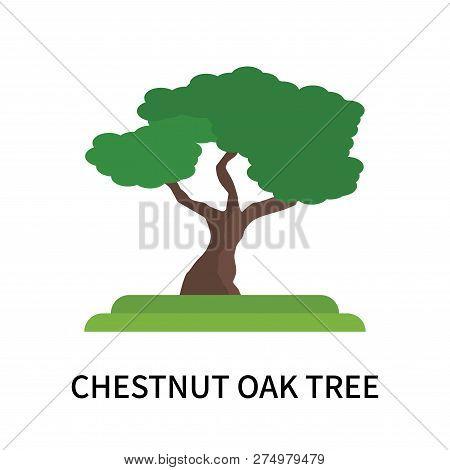 Chestnut Oak Tree Icon Isolated On White Background. Chestnut Oak Tree Icon Simple Sign. Chestnut Oa