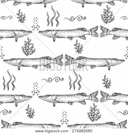 Pike. Seamless Pattern Of Pike. Hand Drawn Sketch Vector Illustration