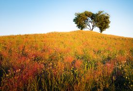 Vibrant Yellow Hill Covered With Dense Grass With A Heart Shaped Tree On The Top Of The Hill With An