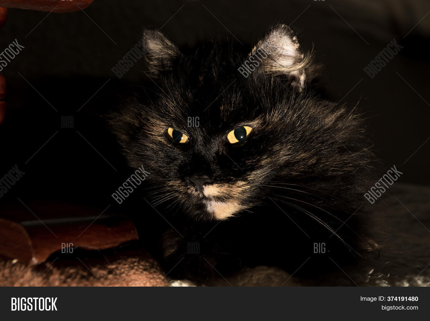 Cat Yellow Eyes Image Photo Free Trial Bigstock