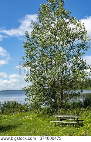 A Beautiful Alder Tree Grows On The Shore Near The Lake, And Under It, On The Lawn, Is A Table With