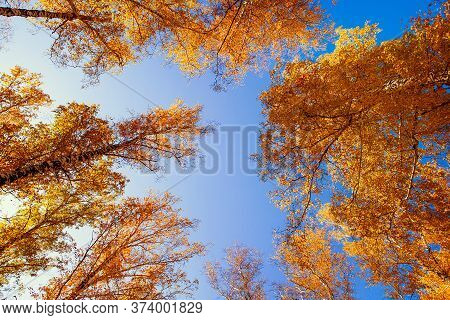 Autumn Landscape Of The Trees And A Sky