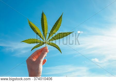 Green Big Leaf Of Cannabis In A Hand Against A Blue Sky. Concept For Growing Marijuana And Producing