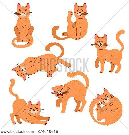 Cartoon Color Cat Icon Set With Lineart Elements Pet Concept Flat Design Style. Vector Illustration