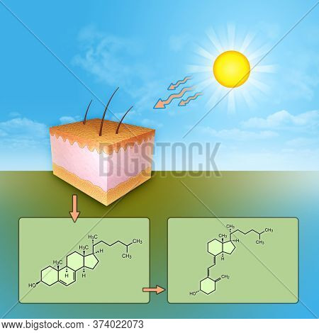 The synthesis of vitamin D through UV rays skin exposure. 3D illustration.