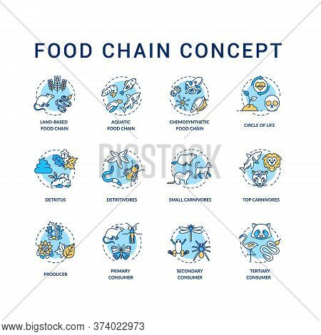 Food Chain Concept Icons Set. Primary, Secondary And Tertiary Consumers. Small And Top Carnivores. L