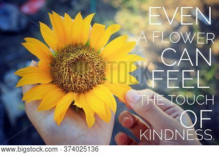 Inspirational Quote  - Even A Flower Can Feel The Touch Of Kindness. With Young Girl Holding Sunflow