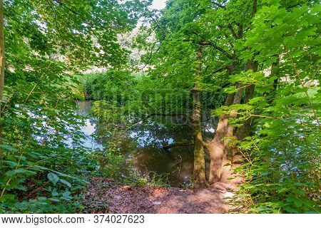 Stream Among Trees And Abundant Green Vegetation, Leaning Trees With Their Branches And Leaves In Th