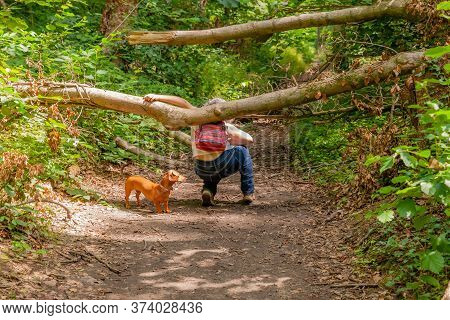 Mature Woman With Her Dog Passing Under A Tree Trunk Obstructing The Path In The Middle Of The Fores