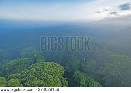 Looking Down On The Amazon Rainforest Canopy In The Morning Mist Near Alta Floresta, Brazil