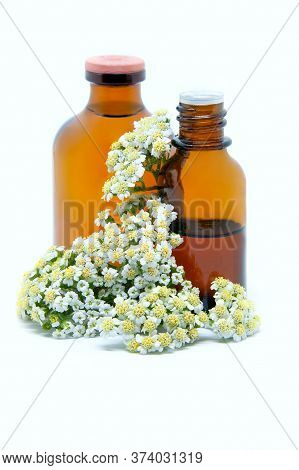 A Bottles Of Yarrow Tincture And Essential Oil With Fresh Yarrow On A White Background. Concept Of H