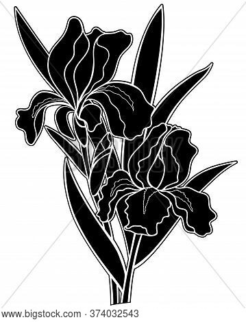 Irises Flowers Black Silhouette - Stock Illustration. Iris - Two Flowers, A Bud And Leaves - A Black