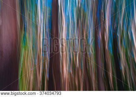 Abstract Painterly Effect Tall Trees On Hamakua Coast, Eucalyptus Tree Plantation Forestry.