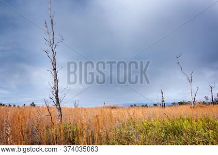 Spindly Dead Tree In Dramatic Expansive Wetland,