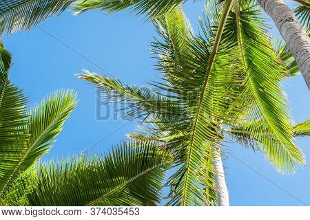 Palm Tree Fronds Overhead Against Tropical Blue Sky.