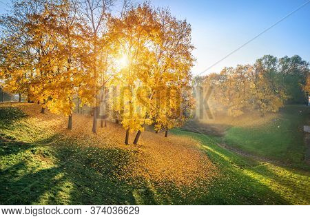 Golden Autumn Leaves On Trees And Grass In The Ravine Of Tsaritsyno Park In Moscow And The Rays Of T