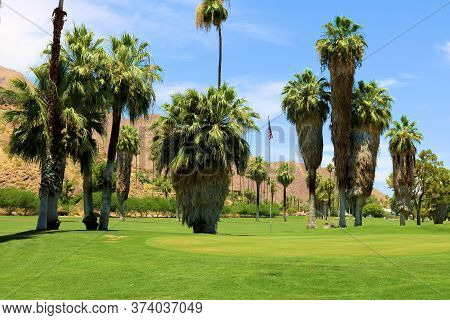 Lush Green Manicured Golf Course Including A Manicured Pudding Green Surrounded By Palm Trees And Ba