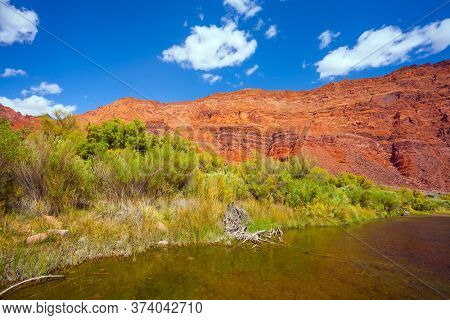 The steep shores of red sandstone. Lee's Ferry is a historic boat ferry across the Colorado River. Wide river and tall green grass. Amazing wildlife. USA. The concept of extreme and photo tourism