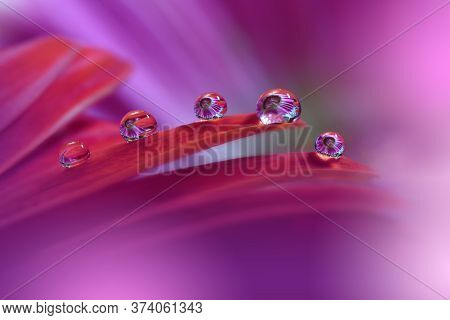 Beautiful Nature Background.Floral Art Design.Abstract Macro Photography.Gerbera Daisy Flower.Pastel Flowers.Violet Background.Creative Artistic Wallpaper.Wedding Invitation.Celebration,love.Close up View.Happy Holidays.Pink Color.Copy Space.Water Drop