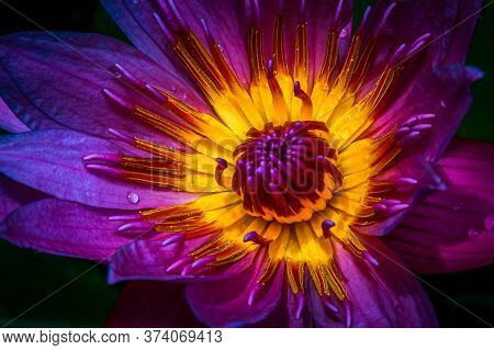 Details Of A Violet Flower, Nectar Of A Violet Flower, Flowers For Arrangements