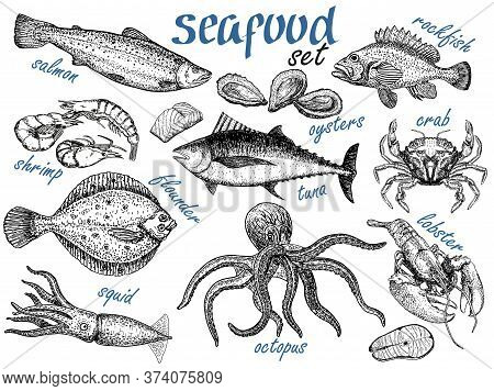 Hand Drawn Sketch Set Of Seafood. Crab, Lobster, Shrimp, Oyster, Fish And Squid. Engraved Vintage Te
