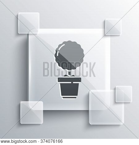 Grey Plant In Pot Icon Isolated On Grey Background. Plant Growing In A Pot. Potted Plant Sign. Squar