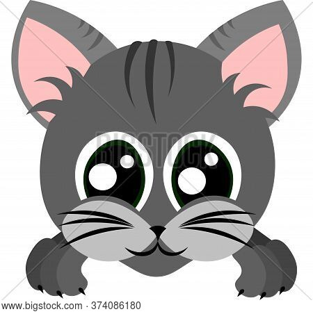 Raw Striped Kitten. Domestic Cat. Pet Muzzle With Big Green Eyes. Design For Pet Shop, Veterinary Cl