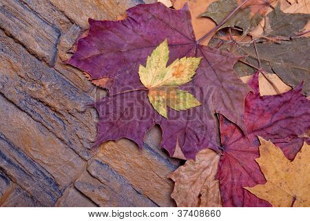 red yellow colorful autumn leaves