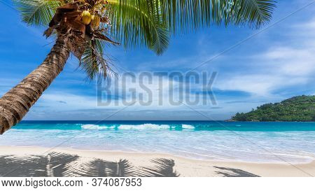 Paradise Caribbean Beach. Sunny Beach With Palm And Turquoise Sea. Summer Vacation And Tropical Beac