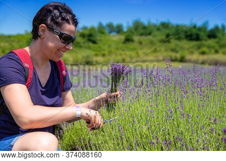 Woman Gather Lavender Flowers And Making Bouquets