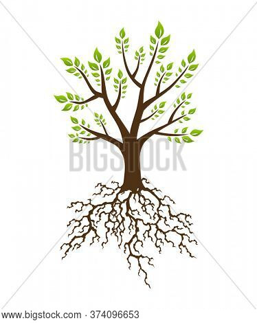 Abstract green tree with strong plant roots silhouette. Tree with lush root. Corporate branding identity design template