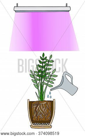 Plant Care Concept. Stock Vector Illustration Of Flower In Pot Under Light Of Phyto Lamp. Red And Bl