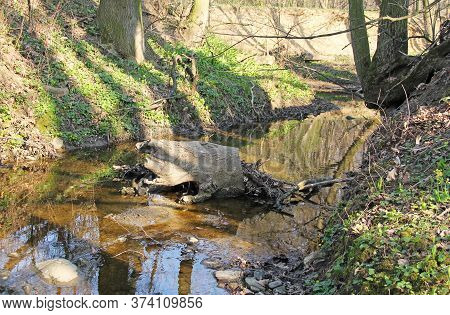 Stump Of A Tree In The Riverbed Of A Brook