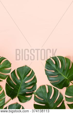 Beautiful Tropical Palm Monstera Leaves Branch Isolated On Bright Pink Background, Top View, Flat La