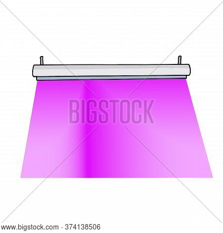 Phyto Lamp For Plants Hanging On Ceiling. Purple Light Of Lamp With Led Infrared And Uv Light. Color
