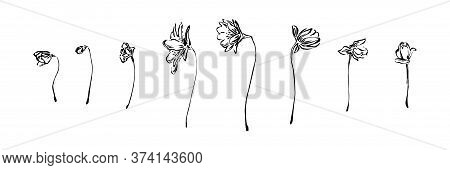 Hand Drawn Anemone Flowers Collection. Outline Spring Floral Ink Painting Set. Black Isolated Sketch