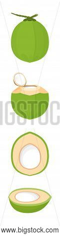 Coconut Isolated On White, Illustration Coconut Half Sliced For Clip Art