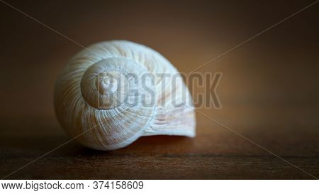 Empty Snail Shell As Decoration On A Wooden Table